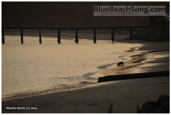 Beach Dog at Sunset © Martie Hevia - WM
