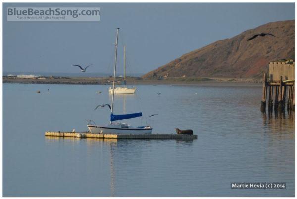 Dock Seal Wakes © Martie Hevia - WM