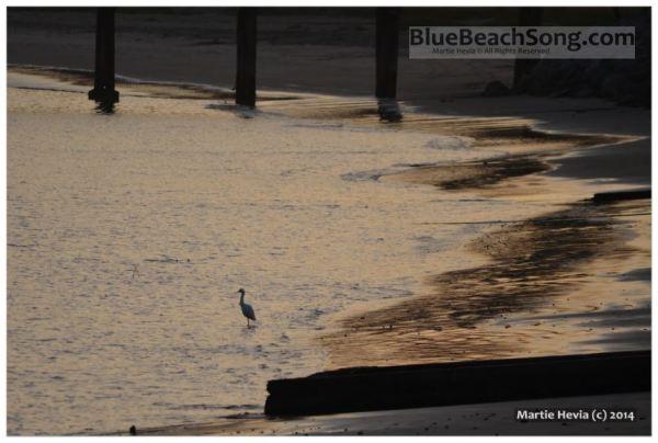 Egret on Shore II © Martie Hevia - WM