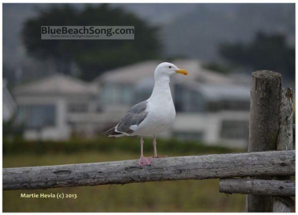 On the Fence © Martie Hevia - WM