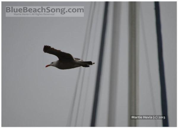 Seagull in Flight III © Martie Hevia