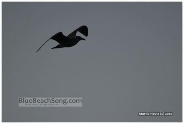 Seagull in Silhouette © Martie Hevia