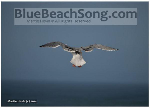 Seagull Leaves © Martie Hevia