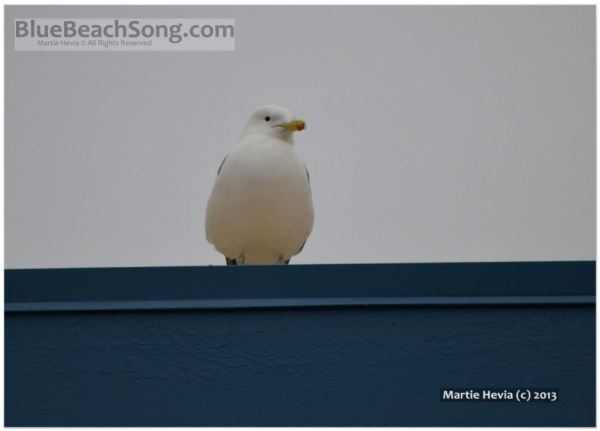 Seagull on a Blue Roof II © Martie Hevia