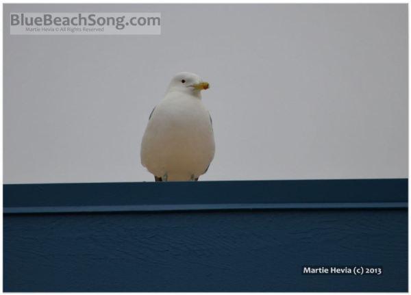 Seagull on a Blue Roof II © Martie Hevia